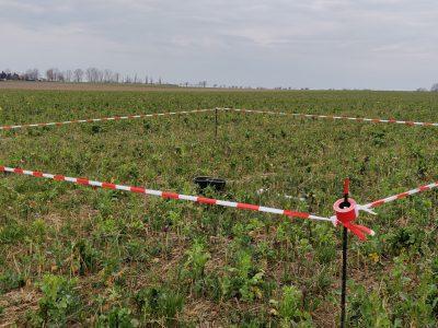 Düngefenster im Mais zur Beurteilung der Nährstoffnachlieferung