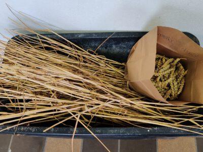 Abschluss der Handernten im Getreide
