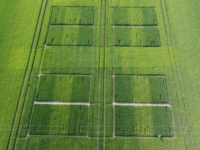 Aktueller Informationen zur Bestandesentwicklung am Exaktversuches in Rödgen (Nordsachsen)