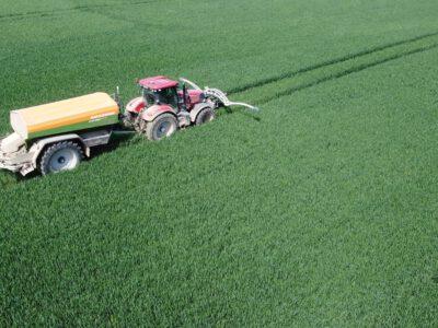 Bei der Weizensortenwahl jetzt schon an die Düngung im nächsten Jahr denken